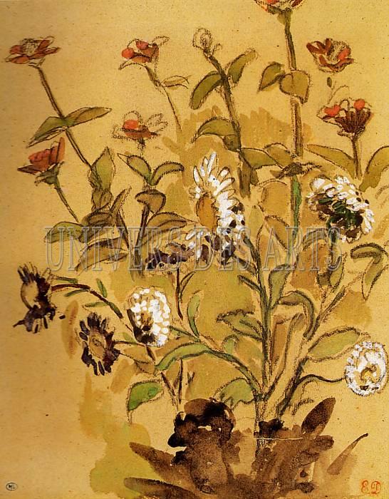 fichier:delacroix_eugene_etude_de_fleurs_marguerites_blanches_et_zinnias.jpg