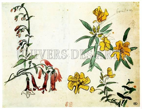 fichier:delacroix_eugene_etudes_de_fleurs_avec_une_branche_de_fuchsias_1855.jpg