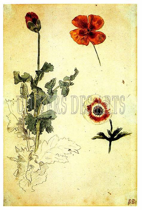 fichier:delacroix_eugene_etudes_de_fleurs_vers_1845_1850.jpg