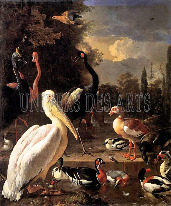 hondecoeter_melchior_oiseaux_dans_un_parc.jpg