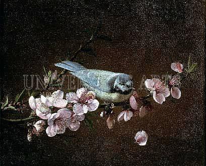 remilleux_pierre_etienne_mesange_charbonniere_sur_une_branche_de_cerisier_en_fleurs.jpg