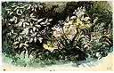 Parterre de fleurs, avec hortensias, scylles et anémomes