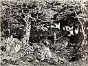 fichier:rousseau theodore chenes de roche.jpg
