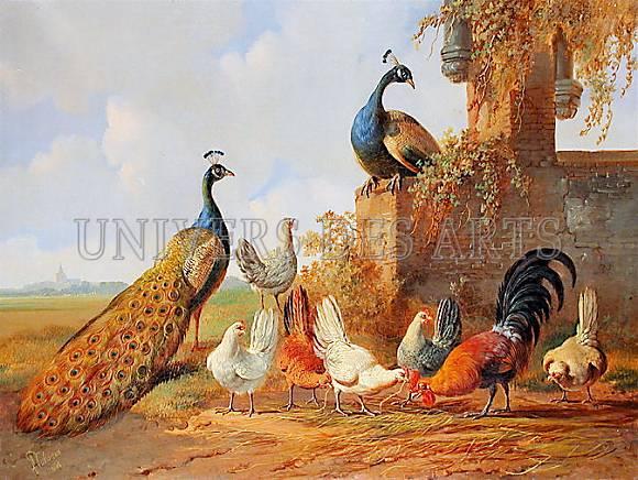 verhoesen_albertus_paons_et_poulets.jpg